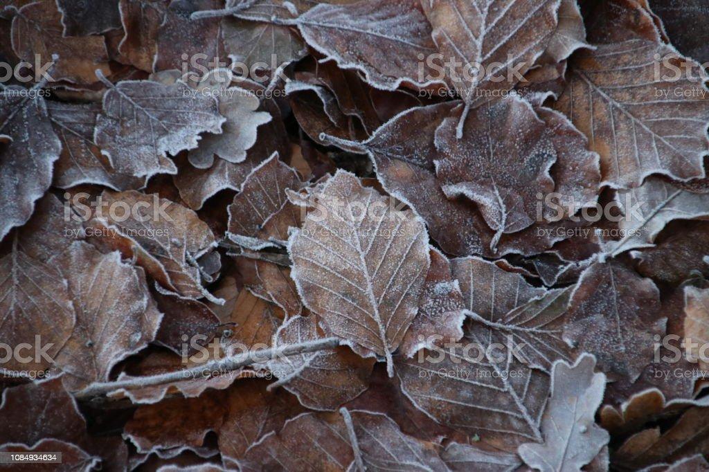 Bevroren bruine bladeren bij het bos van de Grebberberg in Rhenen in Nederland foto