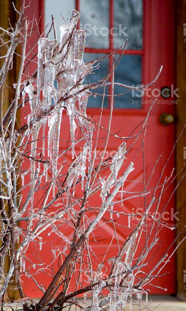 Congelato Bush e Red Door foto stock royalty-free