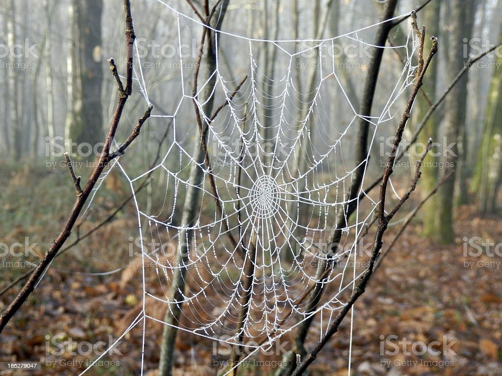 Frozen Cobweb royalty-free stock photo