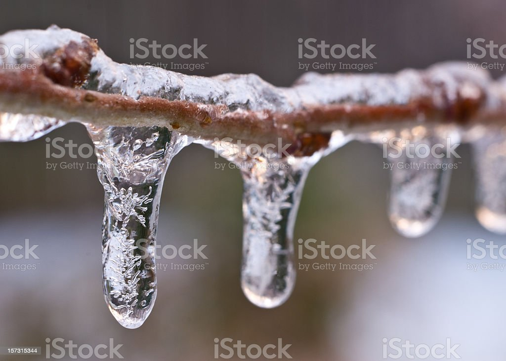 Frozen Crystaline Ice Drops Cling to Tree Branch royalty-free stock photo