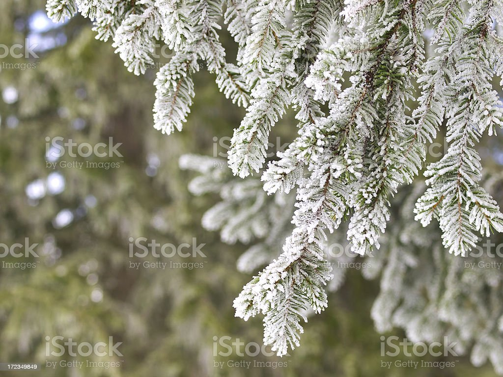 Frozen Deciduous royalty-free stock photo