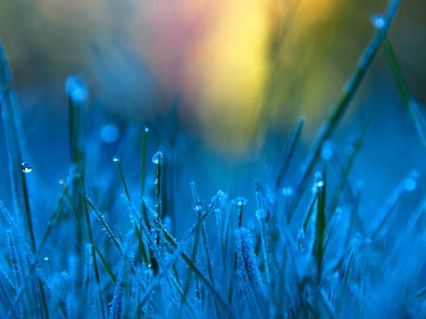 Gefrorene Dew 2 – Foto