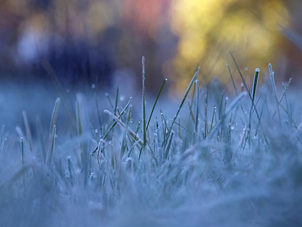 Gefrorene Dew 3 – Foto