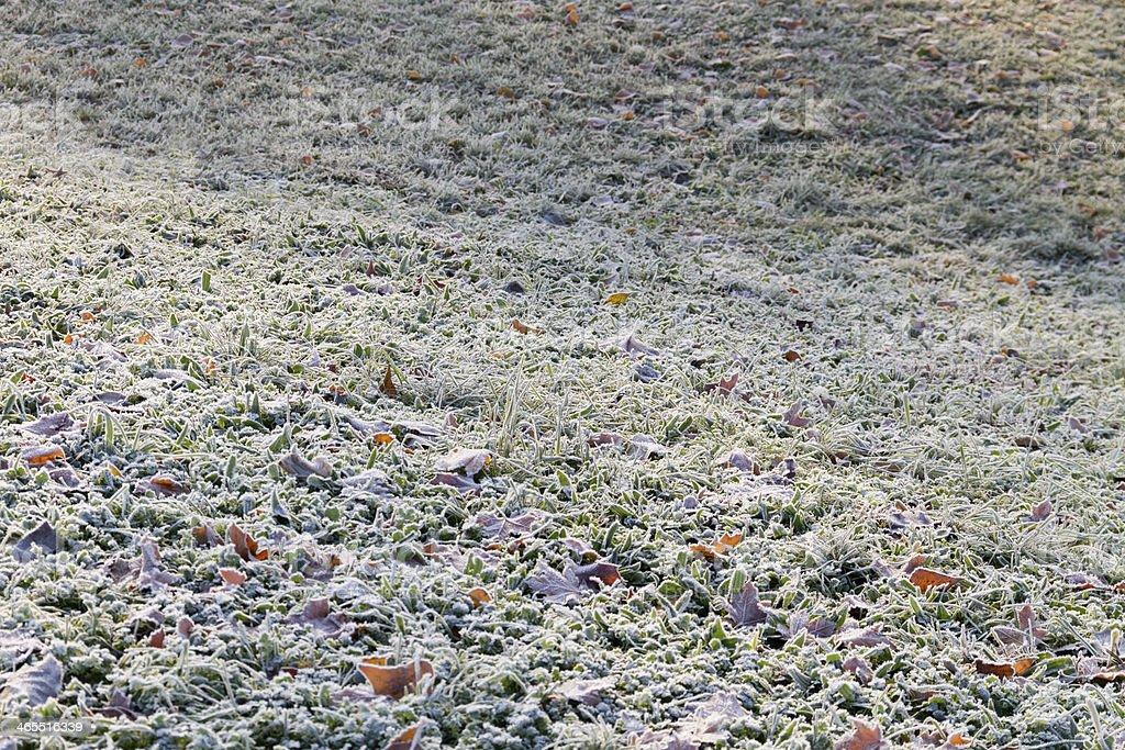 Frozen field stock photo