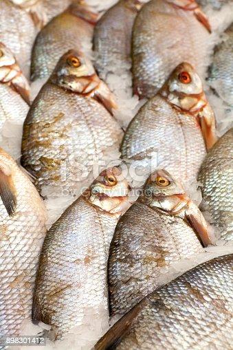 635931692istockphoto Frozen fish. Freshfish market. Gilt-head bream. Fish sale in market. Sea bream fish on ice. Fresh fish on ice for sale at market. Bunch of raw frozen fish on ice. 898301412
