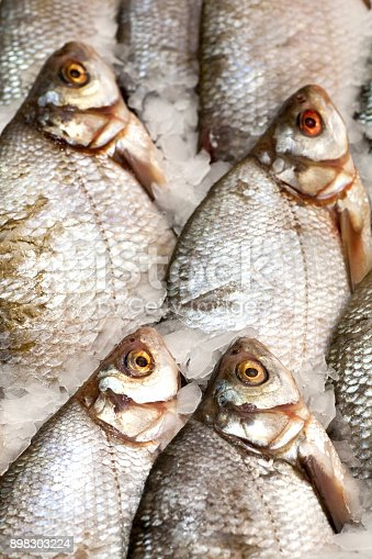 635931692istockphoto Frozen fish. Freshfish market. Gilt-head bream. Fish sale in market. Sea bream fish on ice. Fresh fish on ice for sale at market. Bunch of raw frozen fish on ice. 898303224