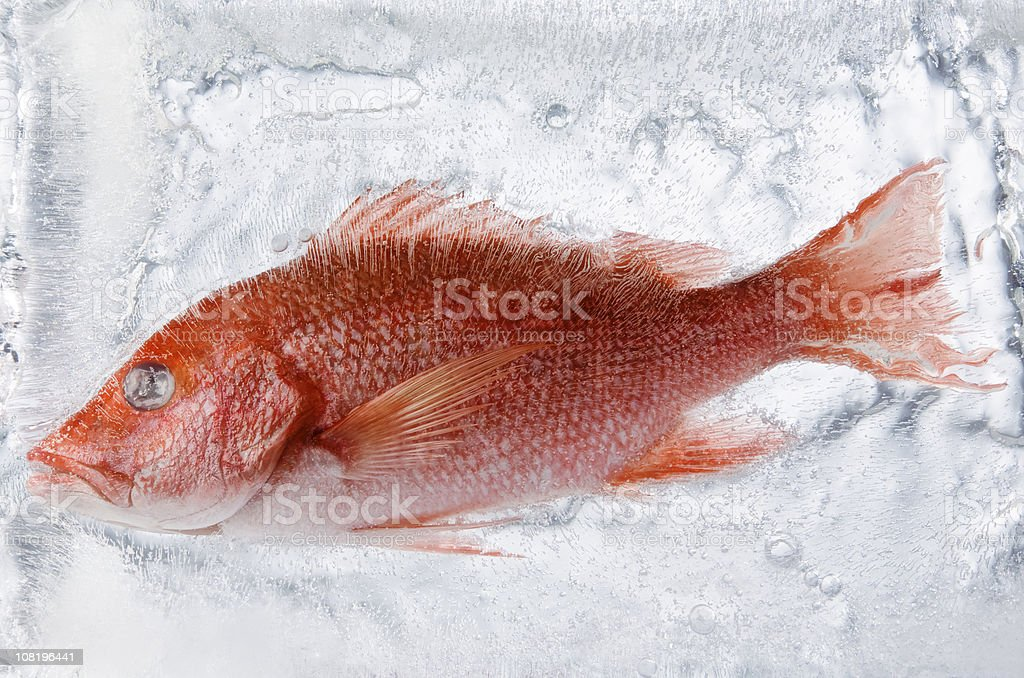 Frozen fish in ice stock photo