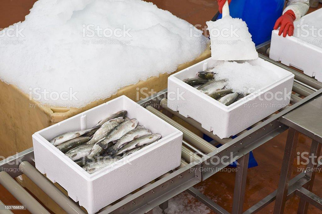 Tiefkühlfisch – Foto