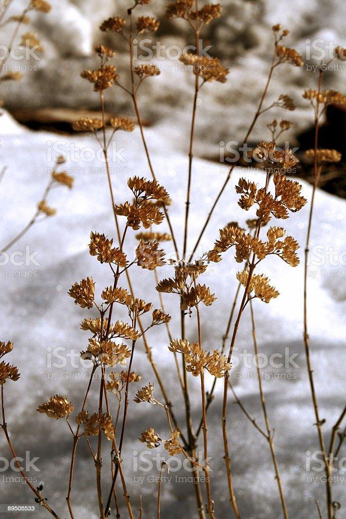 MATERIALE CONGELATO fiori foto stock royalty-free