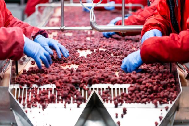 Industrie des aliments surgelés - Photo