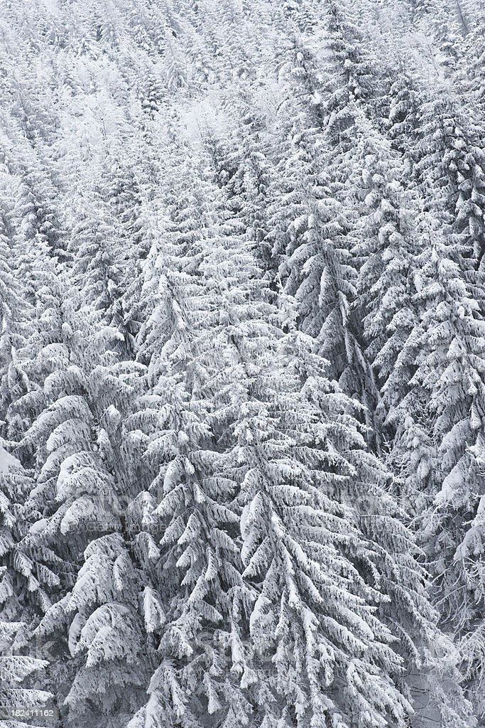 frozen forest background royalty-free stock photo