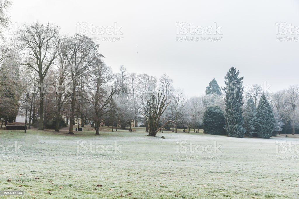 Frozen grass and trees at park in Luxembourg