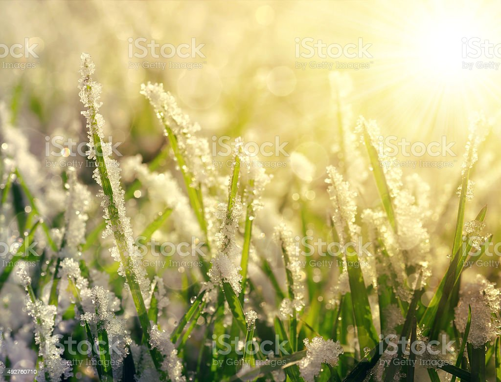 Frozen grass at sunrise close up. stock photo
