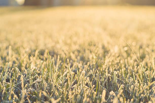 Gefrorenes Gras in sunrise, Nahaufnahme. – Foto