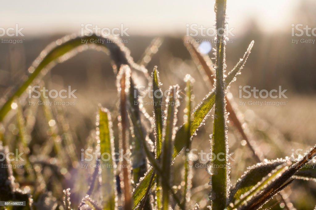Frozen grass close up background. stock photo