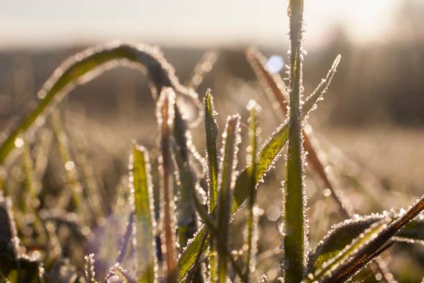 Frozen grass close up background. stock photo