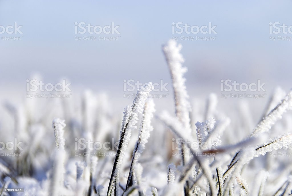 Frozen grass royalty-free stock photo