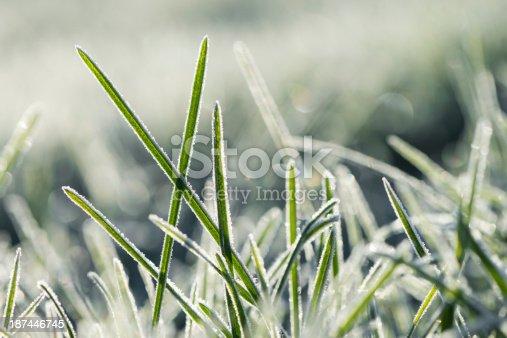Morning frozen blade of grass.