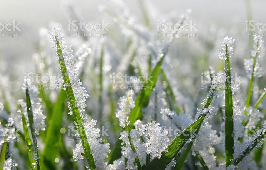 Frozen green grass close up. stock photo