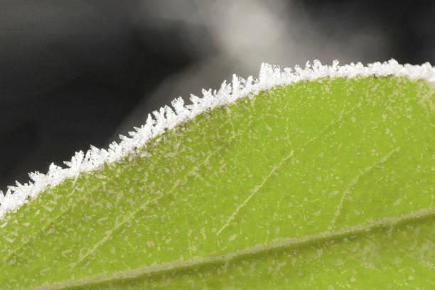 Frozen green leaf macro. stock photo