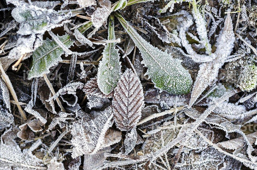 Frozen ground royalty-free stock photo