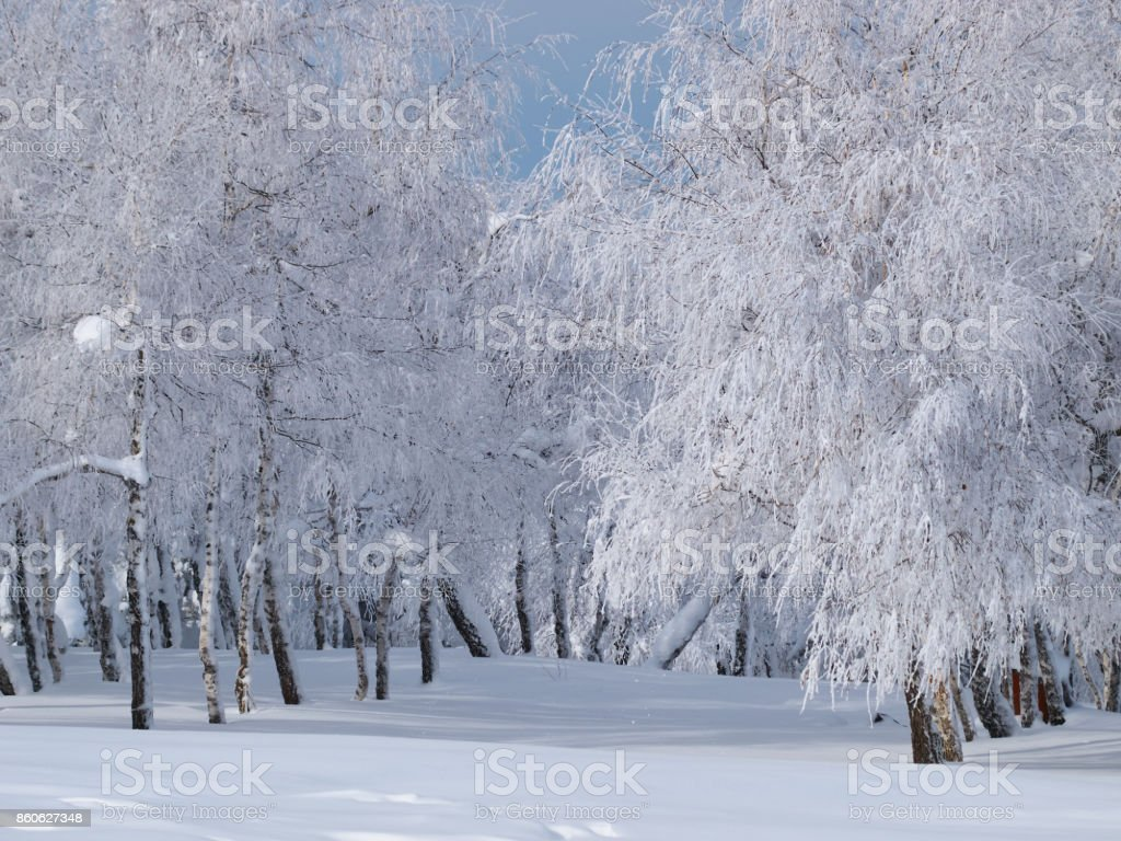 Frozen grove marge stock photo