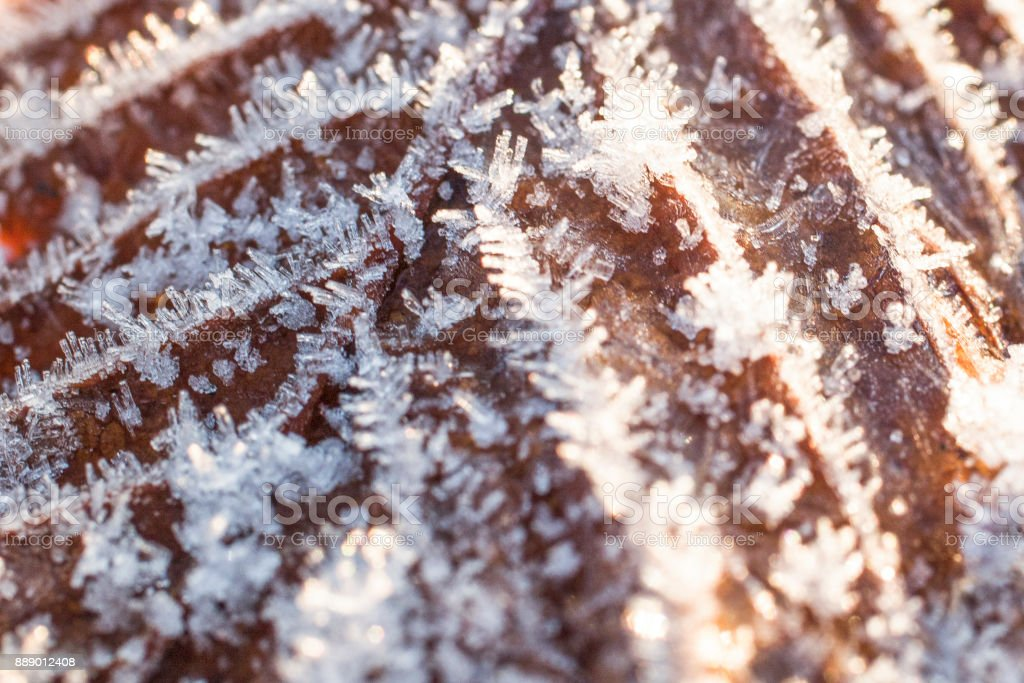 Frozen ice on dry yellow autumn leaf stock photo