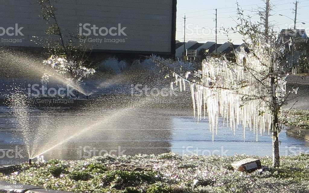Frozen in Florida 1 Feb 19 2015 stock photo