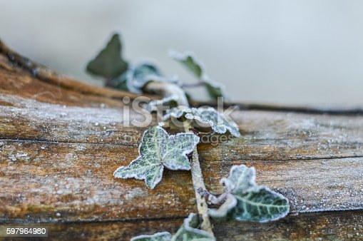 istock frozen ivy leaves on wood 597964980