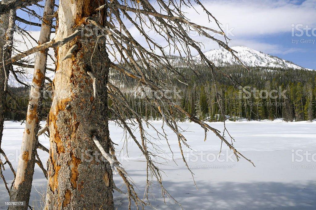 Frozen Lake in Yellowstone royalty-free stock photo