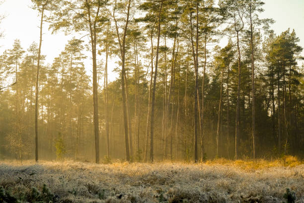 Frozen landscape in a winter forest during a cold winter day stock photo