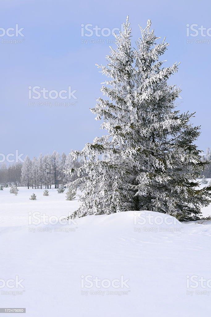 Frozen Landscape stock photo