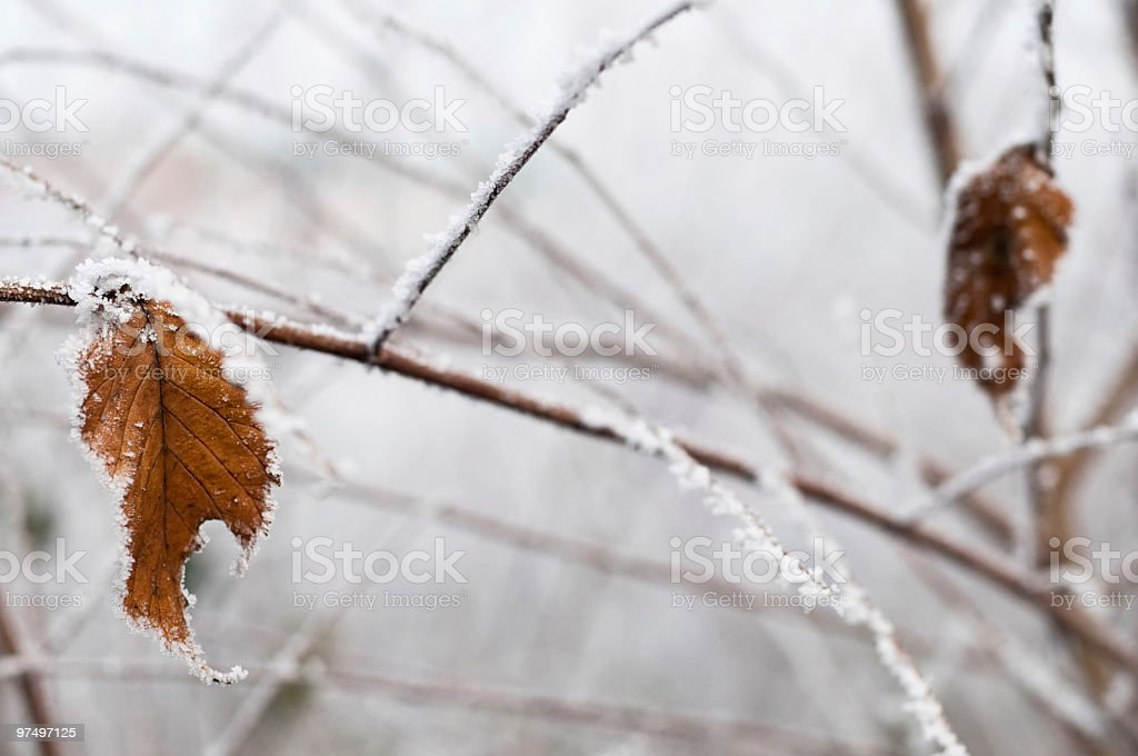 Frozen Leaf on a Tree Branch in Winter royalty-free stock photo