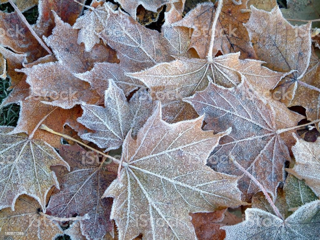 frozen leaves #2 royalty-free stock photo