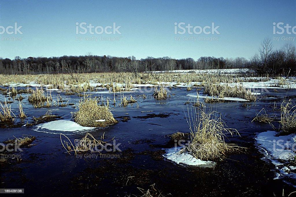 Frozen Marsh, Minnesota stock photo
