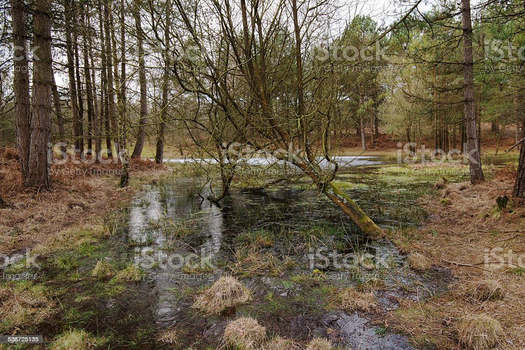 Frozen Marsh Pond in the New Forest, Hampshire, England stock photo