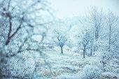 Frozen meadow in winter