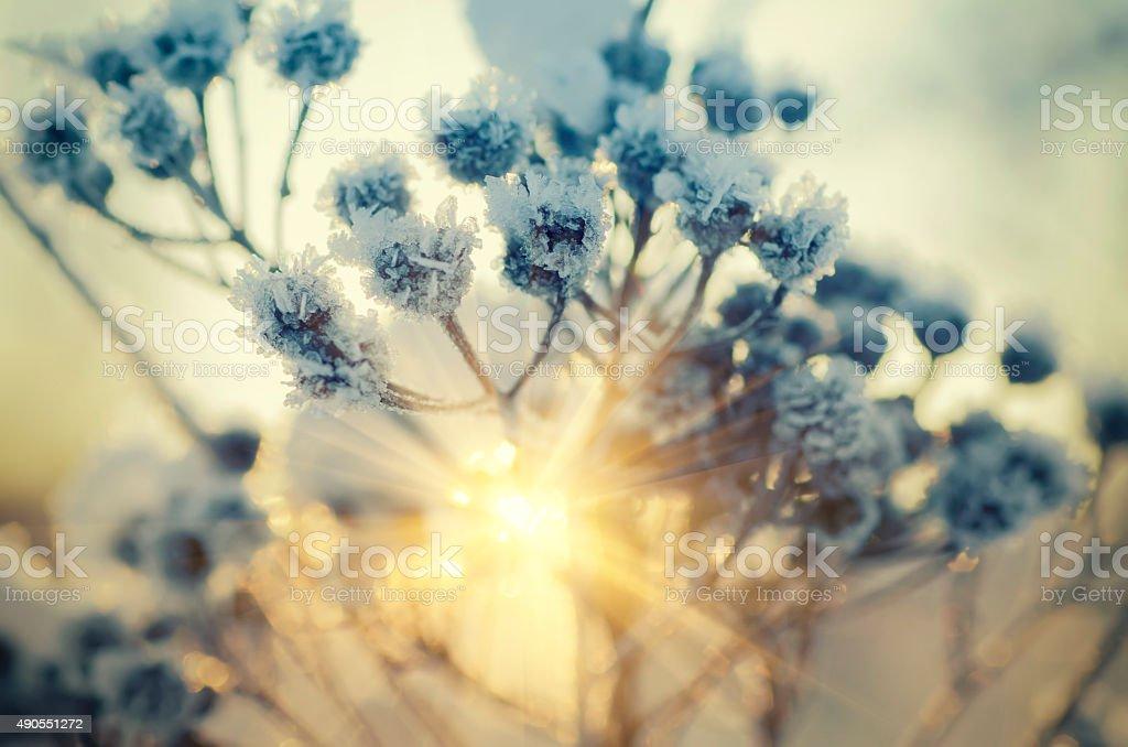 Frozen meadow plant stock photo