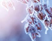 Frozen nature.