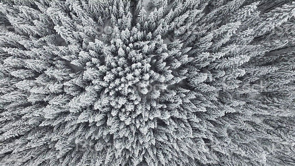 Frozen Pine Forest From the Air stock photo