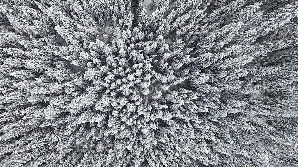 Gefroren Kiefer Wald aus der Luft – Foto