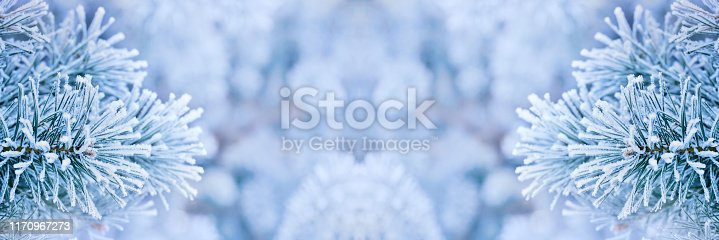 istock Frozen pine tree branches background 1170967273