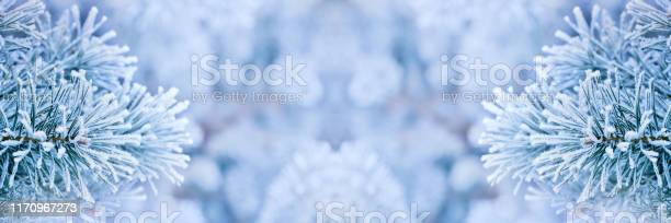 Photo of Frozen pine tree branches background