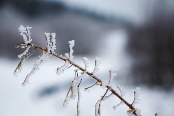 tiefkühlpflanzen im winter, hohes venn - hohes venn stock-fotos und bilder