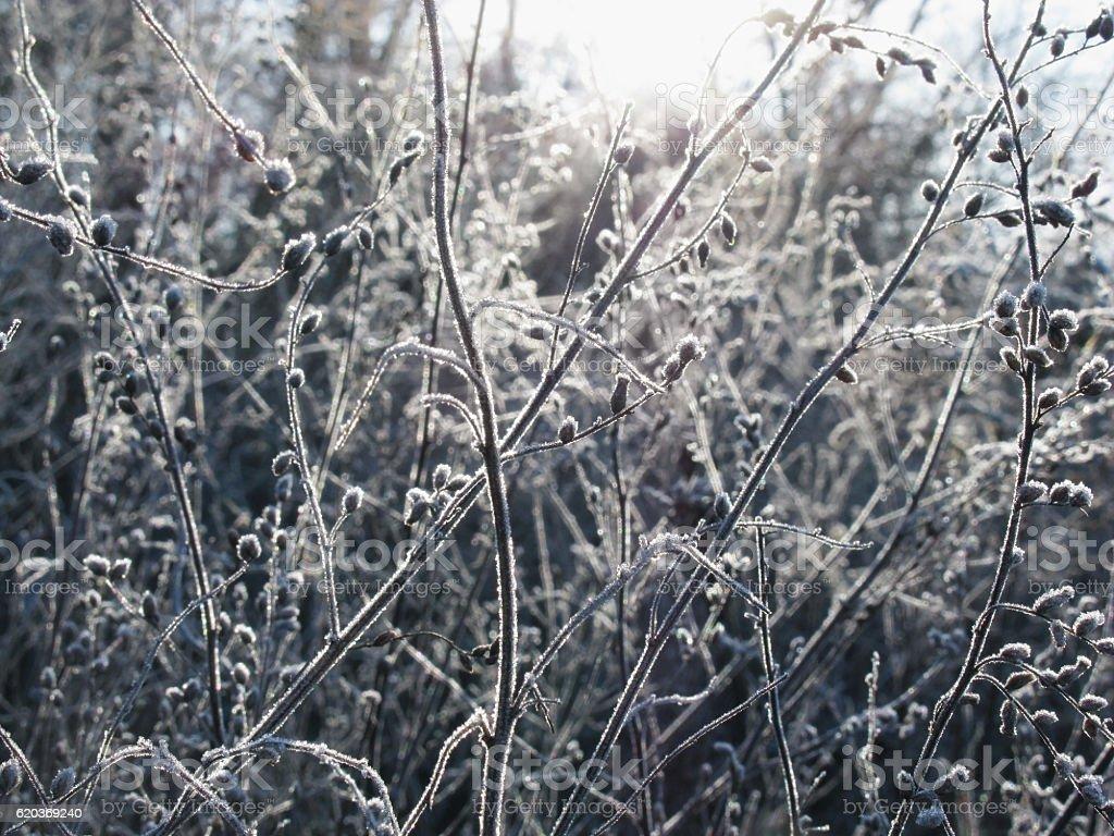 Zamrożone roślin zimą zbiór zdjęć royalty-free