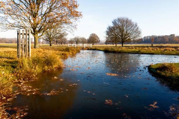 frozen pond in richmond park - richmond park stock photos and pictures