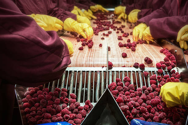 frozen red raspberries in sorting and processing machines - frozen berries stock photos and pictures