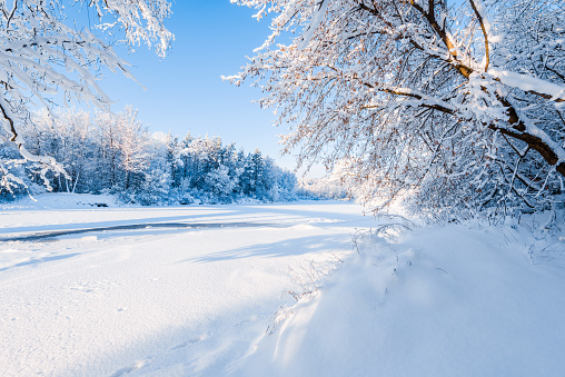 Frozen river and snow-covered forest after a blizzard in a morning haze. Clear blue sky. Winter wonderland. Gauja national park, Sigulda, Latvia