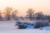 frozen river, morning, sunrise, cold, snow, ice