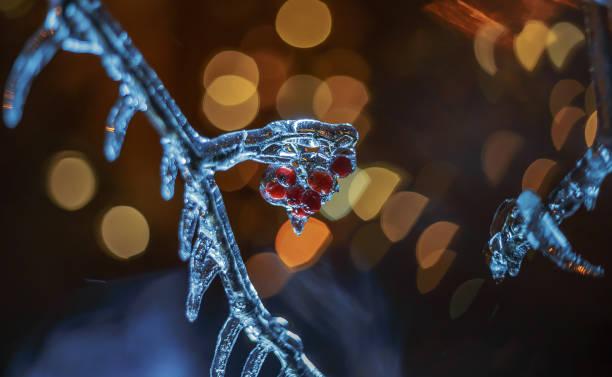 Frozen rowan in the night (1) stock photo